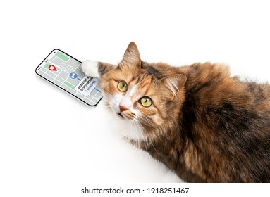 Cat using delivery app on smart phone to online track order on street map. Concept for e-commerce, track service or home delivery shopping. Funny pets using technology or pets imitating owners.