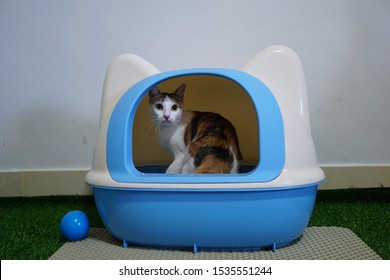 Cat using toilet, cat in litter box, for pooping or urinate, pooping in clean sand toilet. A cat looking at her own poop in the blue litter box