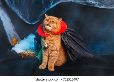 Pet Halloween Costume Images, Stock Photos & Vectors