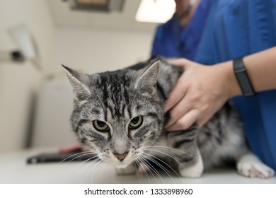 Cat in the veterinary practice. Veterinarian is X-ray the animal