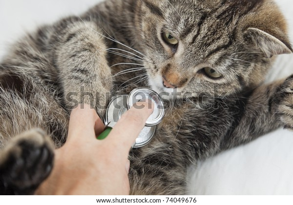 The cat in vet's for a health check.