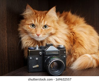 cat and vintage photo camera on a closet shelf