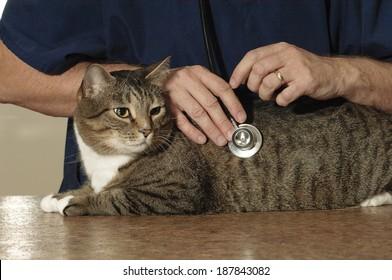 Cat Visits Veterinarian