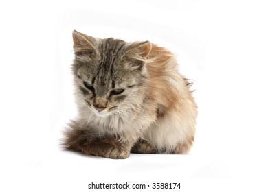 cat is waiting