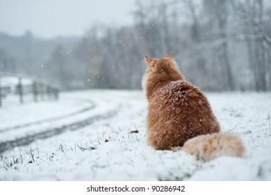 Cat waiting at driveway during snow.