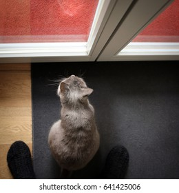 cat waiting in front of a door to get outside