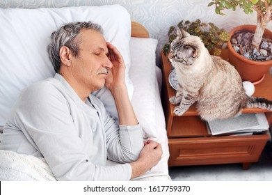 Cat waiting for the senior man owner to wake up in the morning