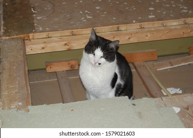 The cat waits during the renovation of the house