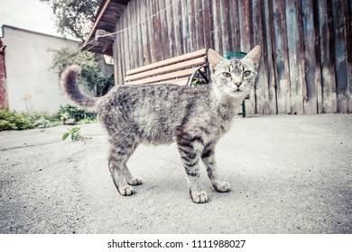 the cat is walking
