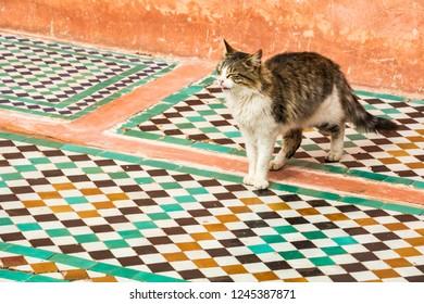 Cat walking across traditional Moroccan tiles in Marrakesh