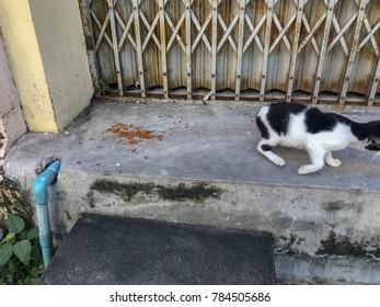 Cat walking away from cat food.