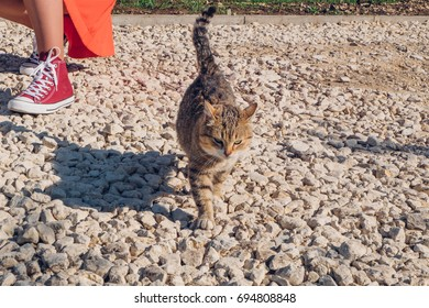 Cat walking carefully on gravel road