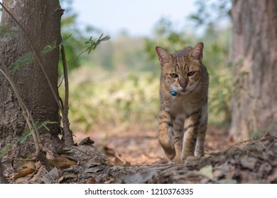 The cat is walking in the forest.