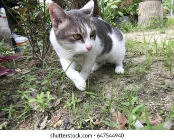 A cat walking in garden