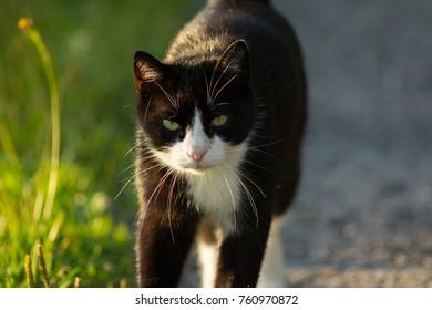 A cat walking in a garden