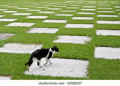 A cat walking on a Japanese Garden