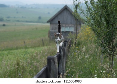 cat walking on tin wooden fence