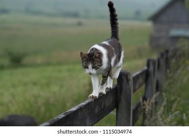 cat walking on wooden fence