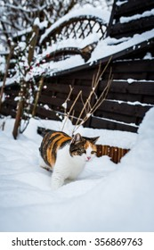 A cat is walking in the snow.