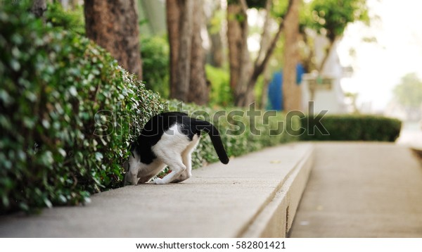 the cat in the wall in Thailand