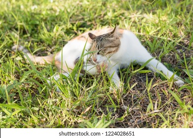 cat wash herself on the grassland in the outdoor