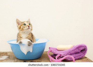 The cat is washed in a bath with water and foam. Copy space