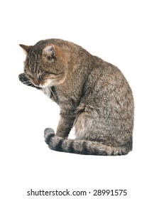 A cat washing by a paw on white background.