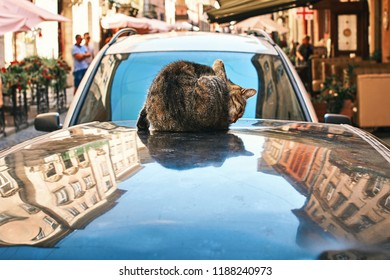 Cat washing itself sitting on an automobile roof reflecting old houses and blue sky in the old historical European city center