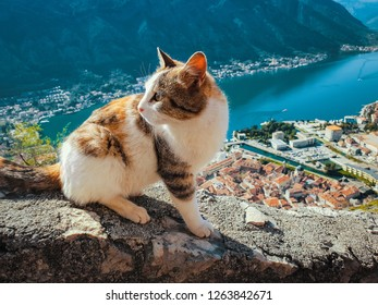 Cat watching the adriatic sea from the kotor castle in montenegro