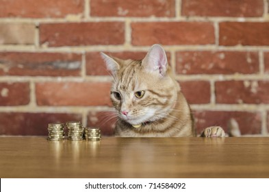 A cat watching stack of coins. Concept image suggesting watching or saving money.