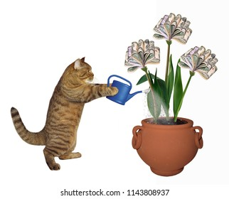 The cat is watering his money trees. White background.