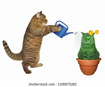 The cat waters an unusual cactus in a pot. White background.