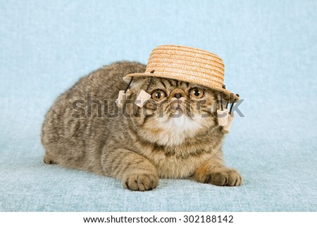 Cat Wearing Australian Straw Hat Dangling Stock Photo Edit Now