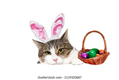 Cat wearing Easter decorations holding the blank board