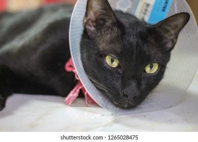 Cat wearing Elizabethan Collars.