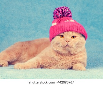 Cat wearing a knitted cap lies in a basket
