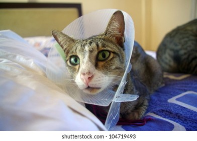 Cat wearing protective buster collar, sitting on bed.