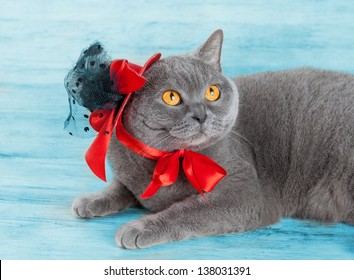 Cat Wearing Red Hat Lying On Blue Background