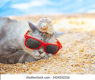 Cat wearing sunglasses with shell on a head lying on the beach