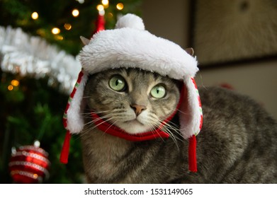 Cat wearing trapper hat with Christmas tree background