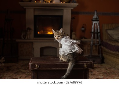 Cat, wearing wedding clothes, sits near fireplace