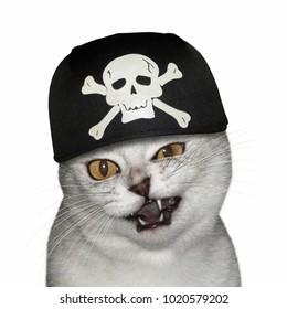 The cat wears a black pirate bandana. White background.