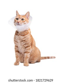 The cat wears a cone collar to protect and prevent licking the wound after sterilization. Neutering the male cat. Sick cat concept. White background.