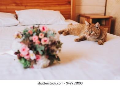 Cat Wedding Images, Stock Photos & Vectors   Shutterstock
