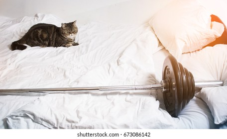 The cat is with the weightlifting bar on the bed, resting