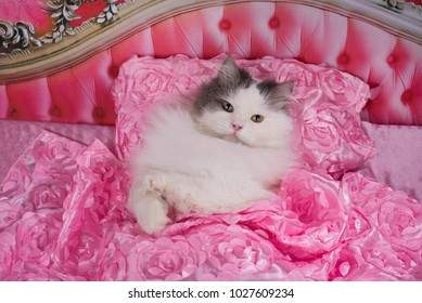 the cat went to bed in a pink bed