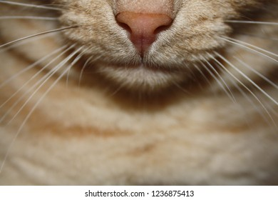 cat whiskers and nose