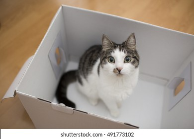cat in the white box