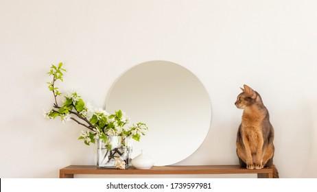 Cat white living room minimalist interior shelf mockup. Decoration living room home interior. Cozy interior shelf round mirror flower vaze. Room cat modern white empty wall. Copy space backdrop design
