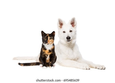 cat and white puppy shepherd in front of a white background